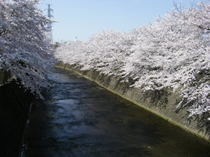 2009_04060017_2